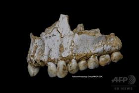 ネアンデルタール人はもっとたくさんいた? 新たなDNA解析手法で新説