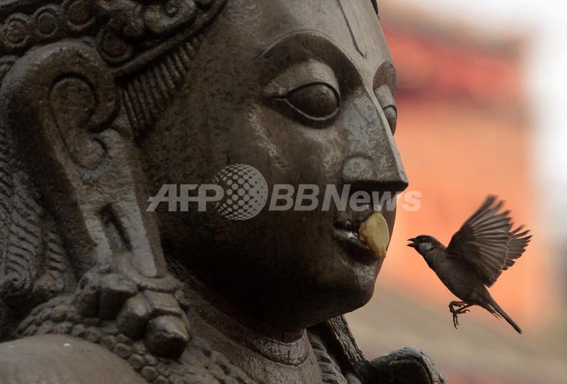 神像と口づけする小鳥、ネパール