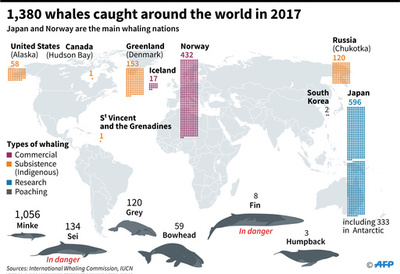IWC、今後6年の先住民捕獲枠を可決 クジラ保護宣言では分裂