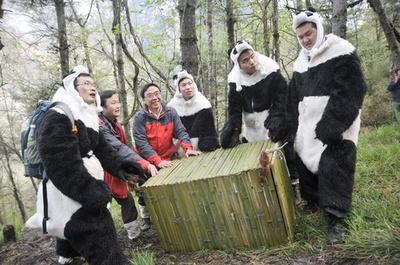 ジャイアントパンダの自然回帰への道 四川臥龍