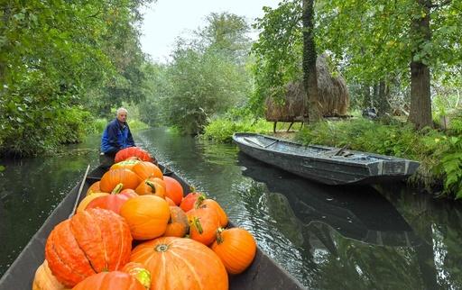 カボチャ載せて運河をゆらゆら 秋深まるドイツの森