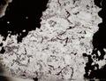 地球最古の化石発見、約40億年前の生命の痕跡
