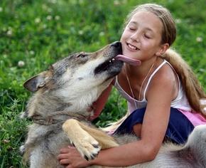 オオカミと暮らす家族、5年前まで野生 ベラルーシ