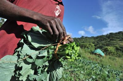 白人の農地を子どもにも分配、ジンバブエ土地改革で不正横行