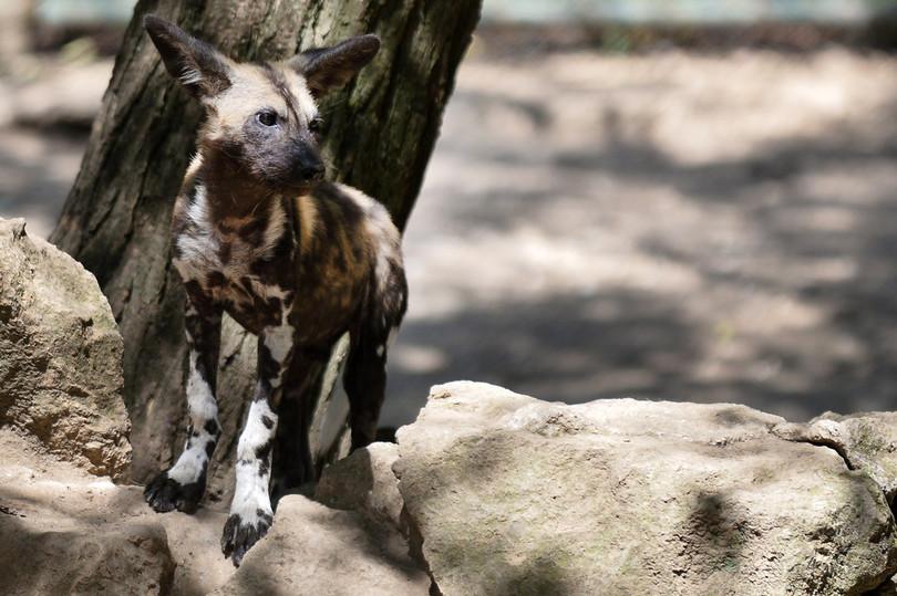 地球温暖化で半数の種が絶滅の恐れ、アマゾンなど33の重要地域