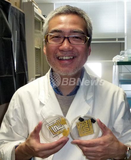 脳を持たない知能のカギ「粘菌」、活躍する日本の研究者たち
