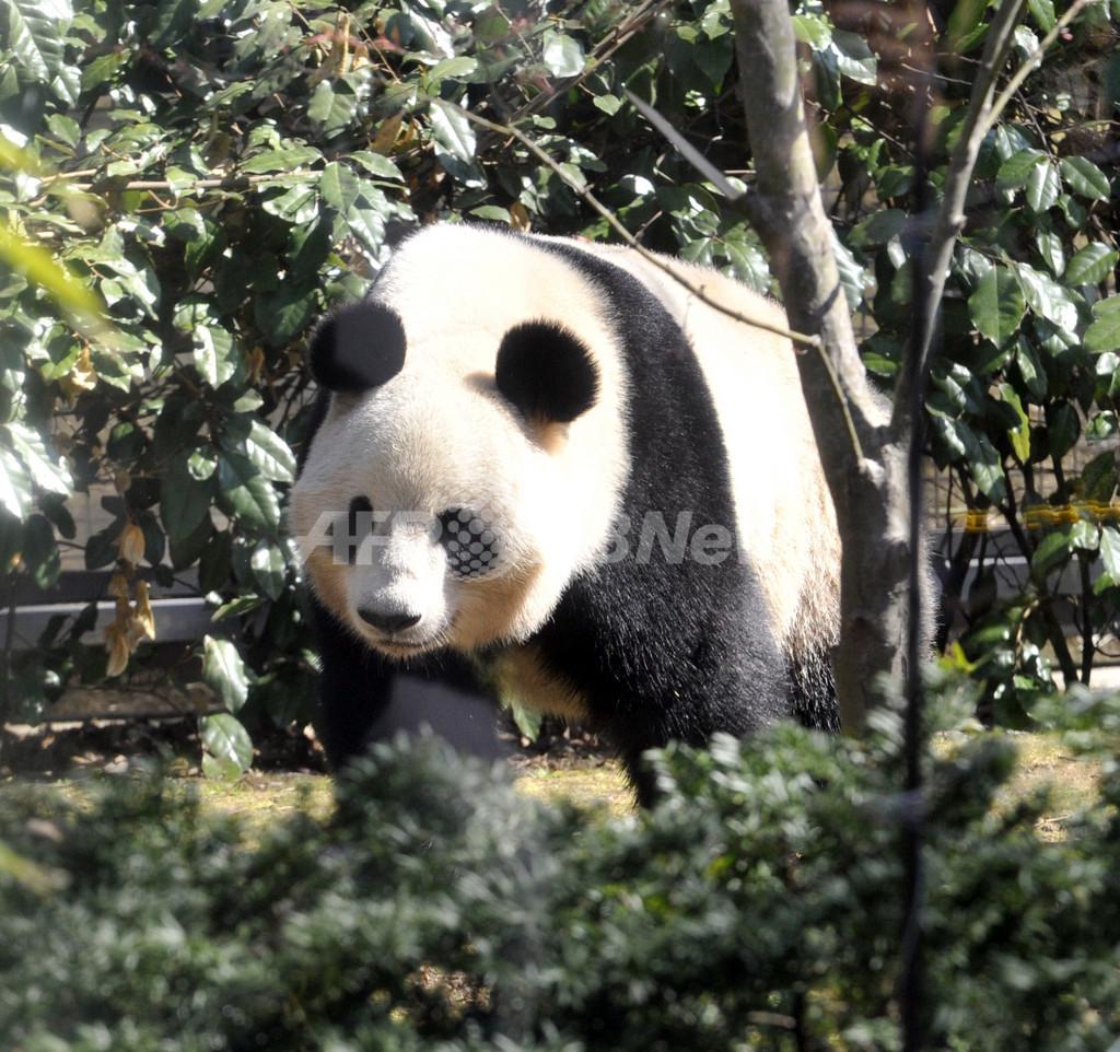 上野動物園でパンダの赤ちゃん誕生、24年ぶり