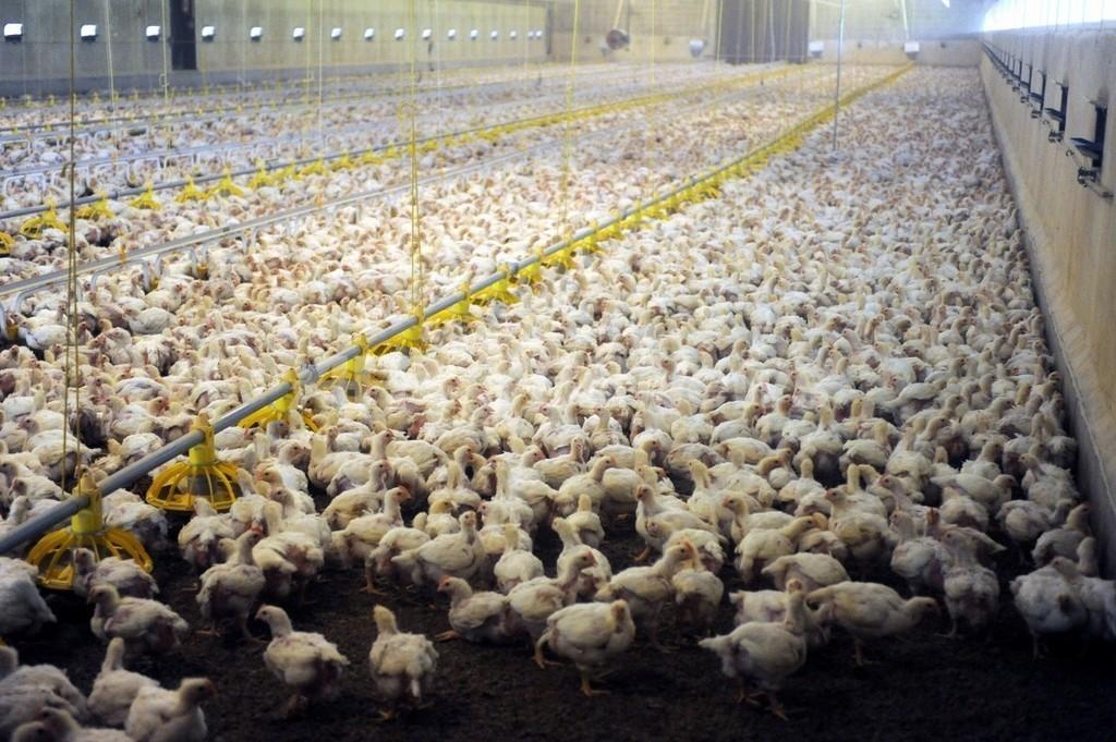 家畜への抗生物質投与、耐性菌出現の要因に 米学会