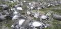 トナカイ300頭以上が落雷で死ぬ、ノルウェー