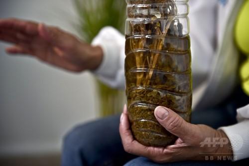 メキシコのおばあちゃんが作る「大麻薬」