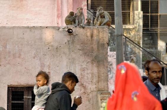 生後間もない乳児、家屋に侵入したサルにさらわれ死亡 インド
