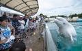 「涼しくなった!?」シロイルカが水噴射 八景島シーパラダイス