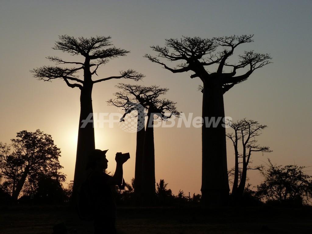 マダガスカルで横行する人骨盗難、5人を逮捕