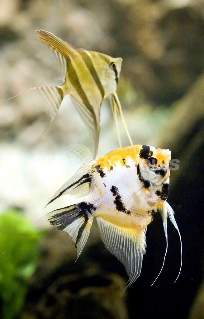内気な魚は相手の勇敢さを引き出す、英研究