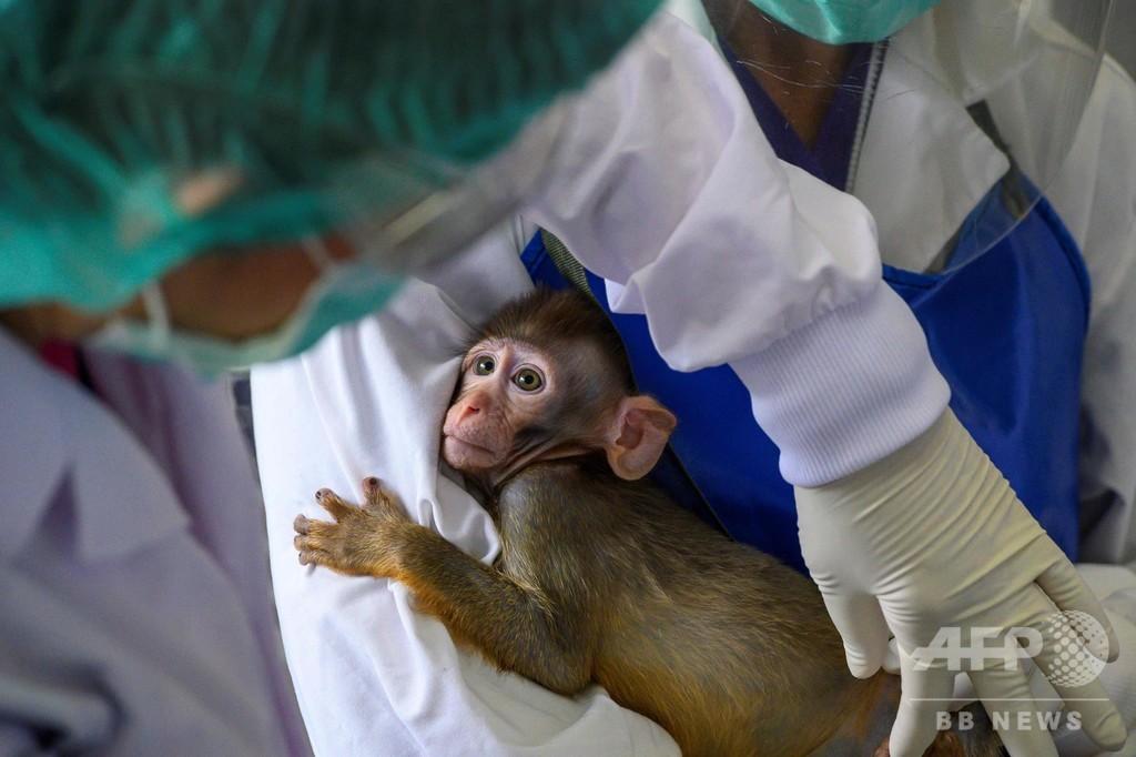 タイ、コロナワクチン開発競争に参戦 サル実験開始