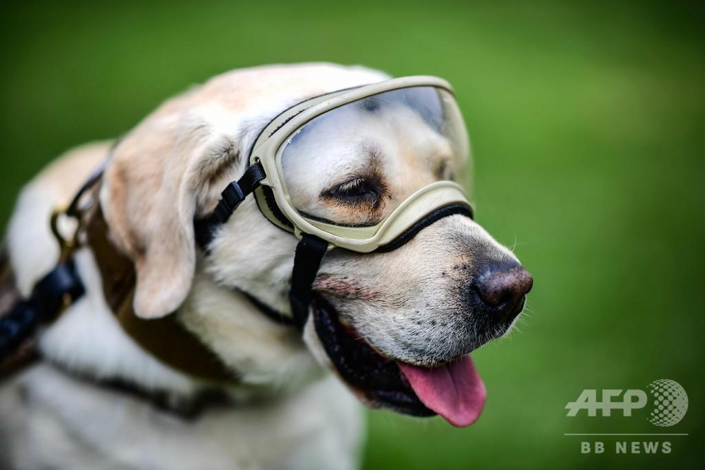 救助犬フリーダが引退 メキシコ大地震などで活躍