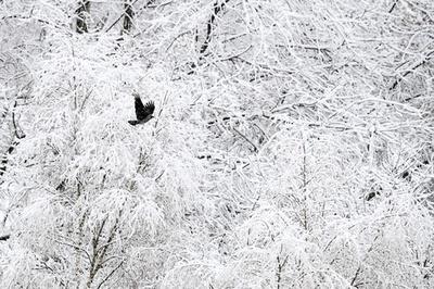 絵のような雪景色、モスクワ
