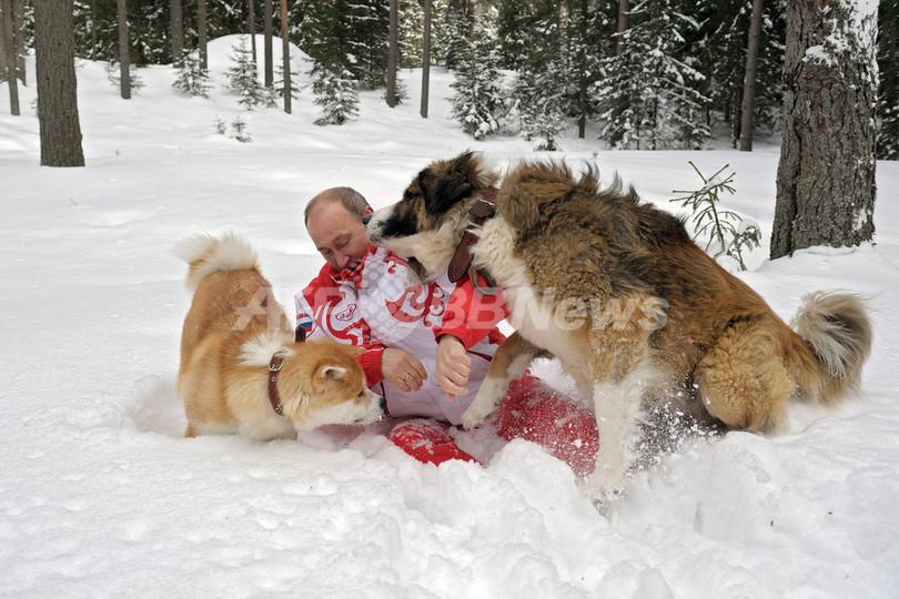 秋田犬「ゆめ」と戯れるプーチン大統領、ロシア