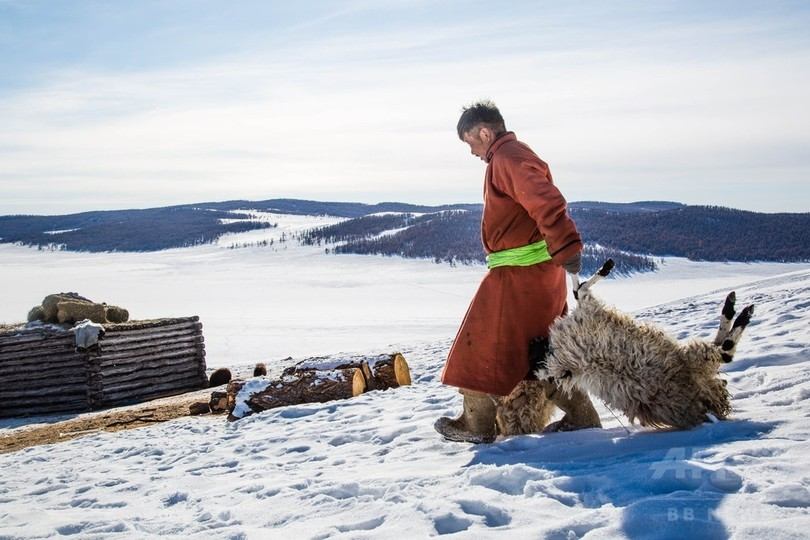 モンゴルで2年連続の気象災害、多くの家畜が死に直面 赤十字