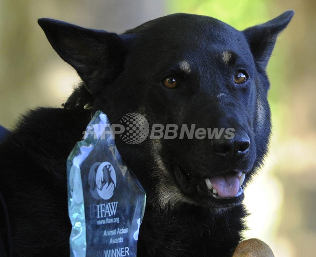 頭蓋骨骨折の警察犬を表彰、英ロンドン暴動
