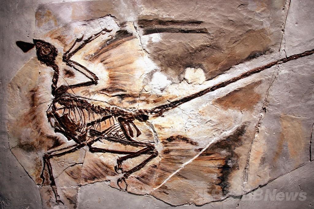 中国の白亜紀化石群、「ポンペイ型噴火」が原因 研究