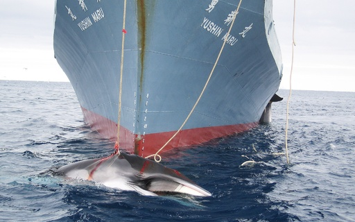 豪とNZ、日本の調査捕鯨中止を命じたICJ判決を歓迎