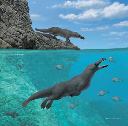 4本足のクジラの祖先、ペルーで化石発見