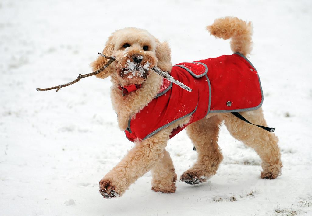 犬に木の棒を取りに行かせるのは危険、英獣医師会が警鐘