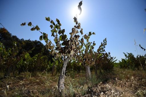 IUCNのレッドリスト更新版公開、気候変動で野生生物への脅威増大