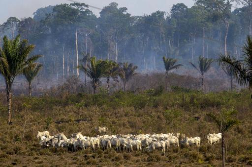 アマゾン森林火災、新たに数百件 ボリビアは支援受け入れ表明