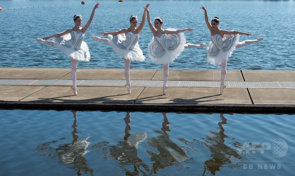 湖に映る白鳥姿のバレエダンサー、シドニー
