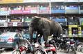 ゾウやトラに襲われ1日1人が死亡 インド