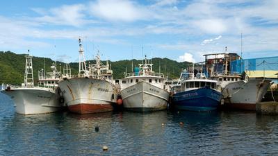 マグロ・カツオ漁の入漁料、1日100万円に値上げへ
