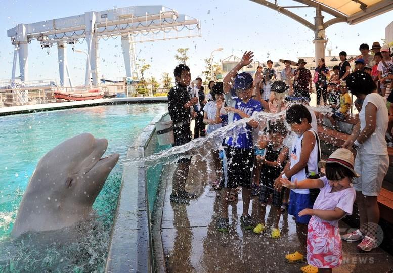 シロイルカの水しぶきで涼もう、八景島シーパラダイス