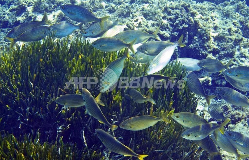 魚の小型化、個体数と漁獲量に大きく影響 研究