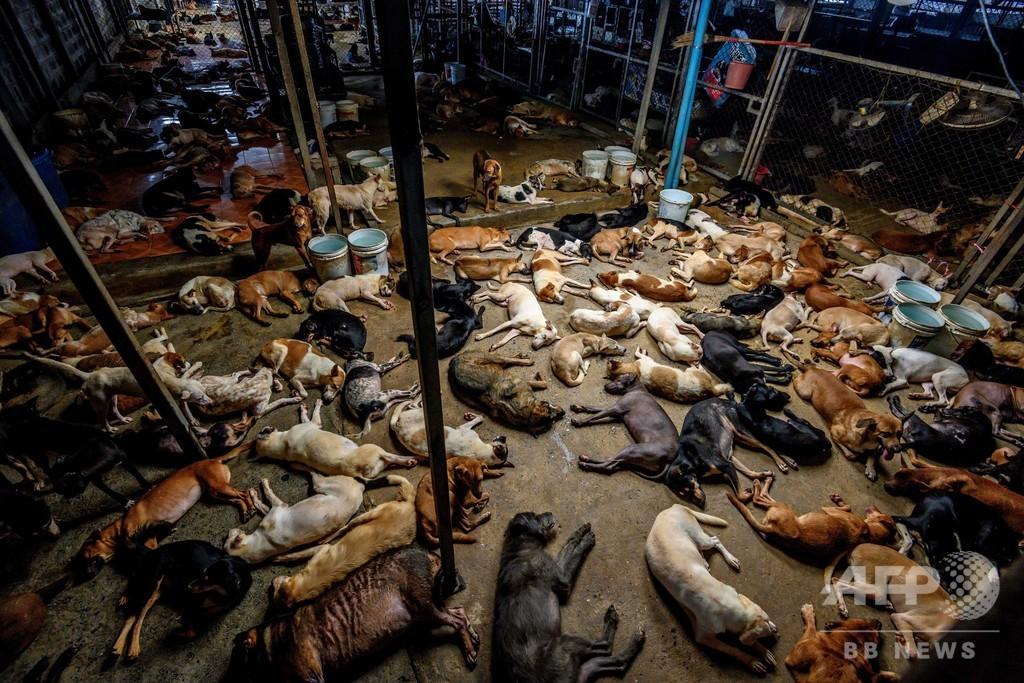 過密状態の動物保護施設、新型コロナで寄付金減 窮状訴える タイ
