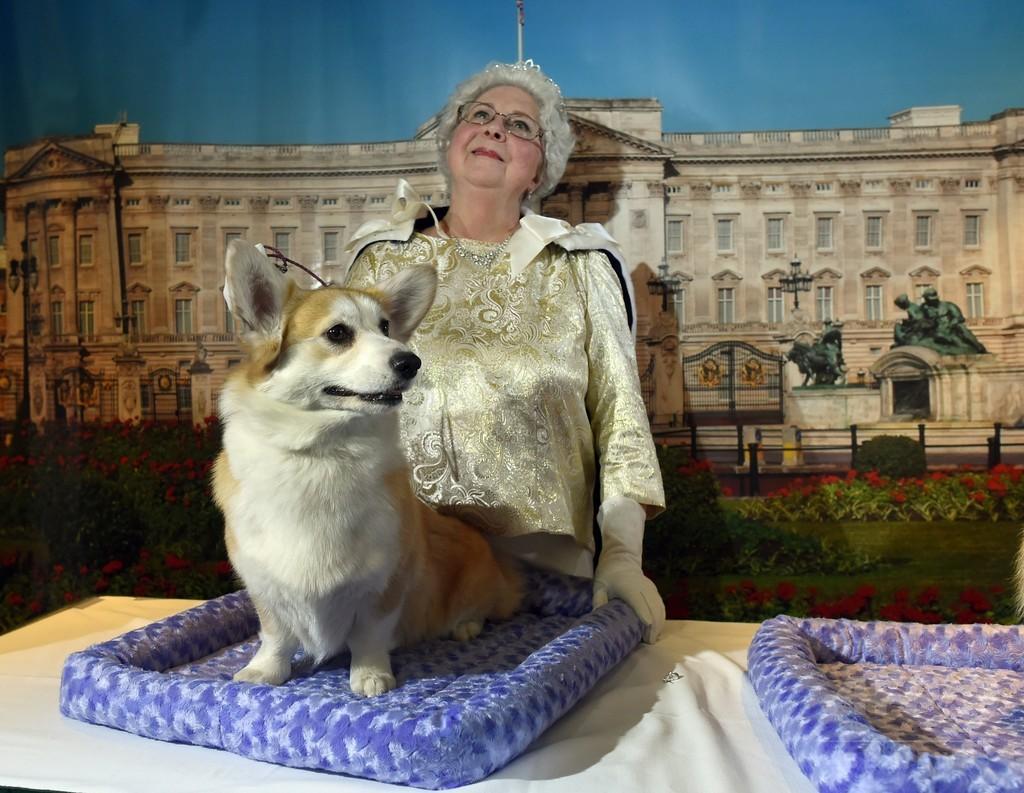 愛すべき英国原産種の犬に絶滅の危機?