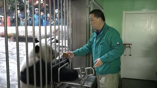 動画:「食べて寝る」パンダのお世話 北京動物園の飼育係