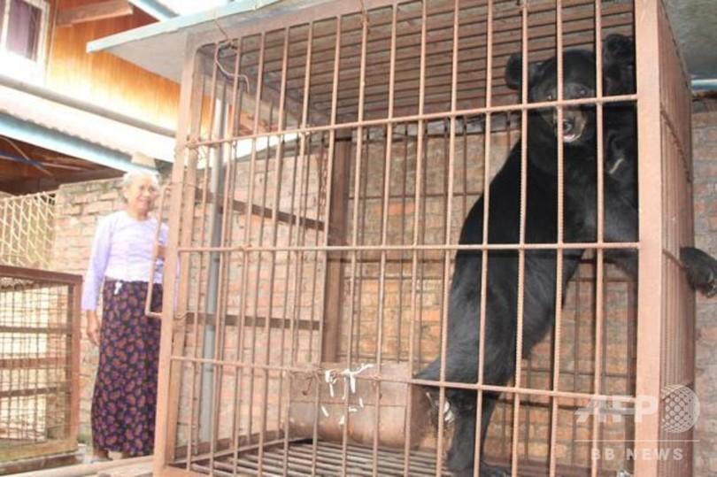 「熊が大きくなり育てられなくなった」飼い主のおばあさん自ら通報 雲南