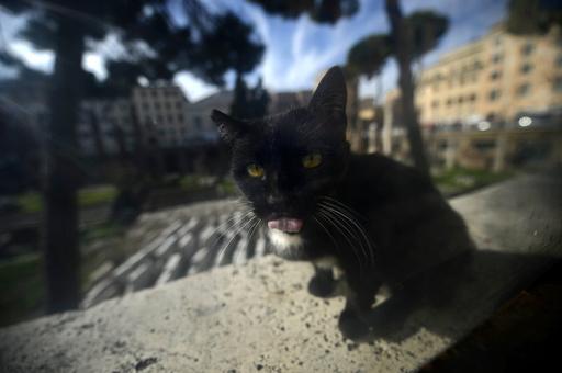 狂犬病の子猫に接触した10人に発症予防措置、フランス