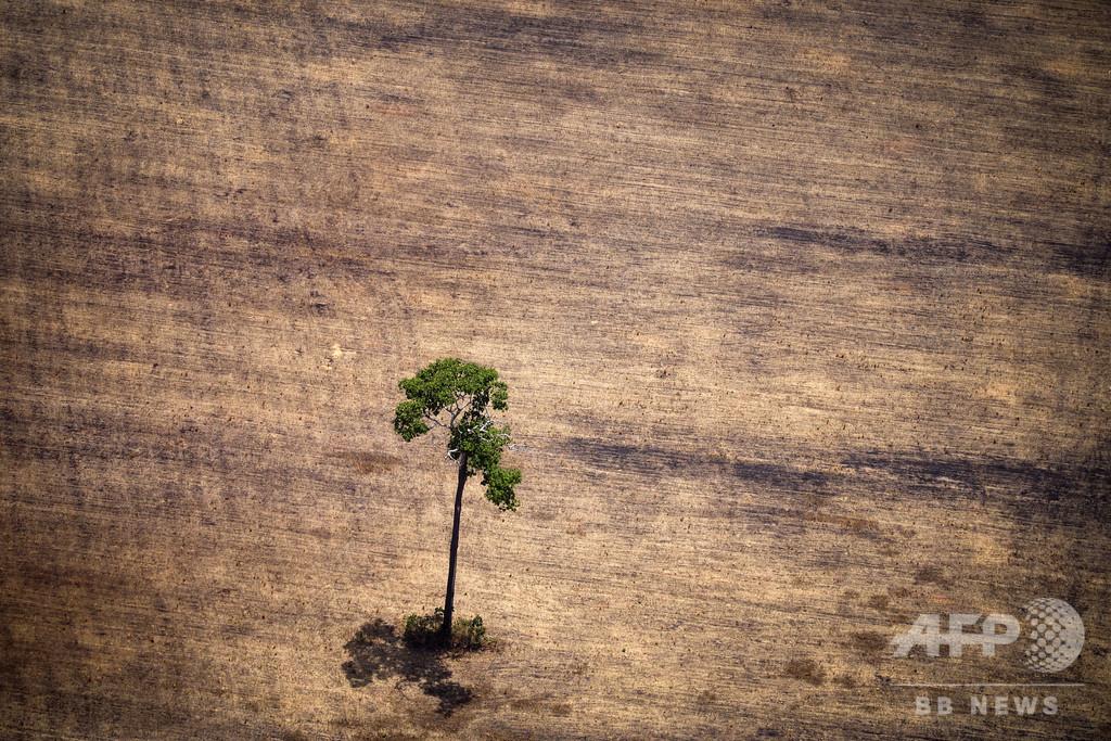 伐採拡大するなか森林火災が急増、ブラジル・アマゾンの熱帯雨林