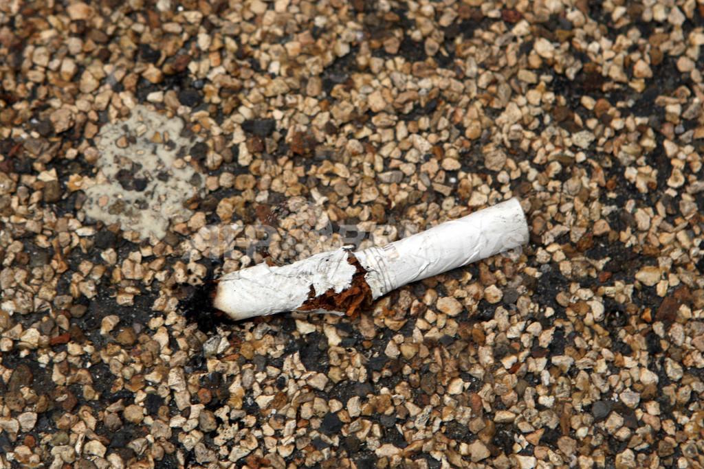 都会のスズメ、タバコの吸い殻を有効活用 研究