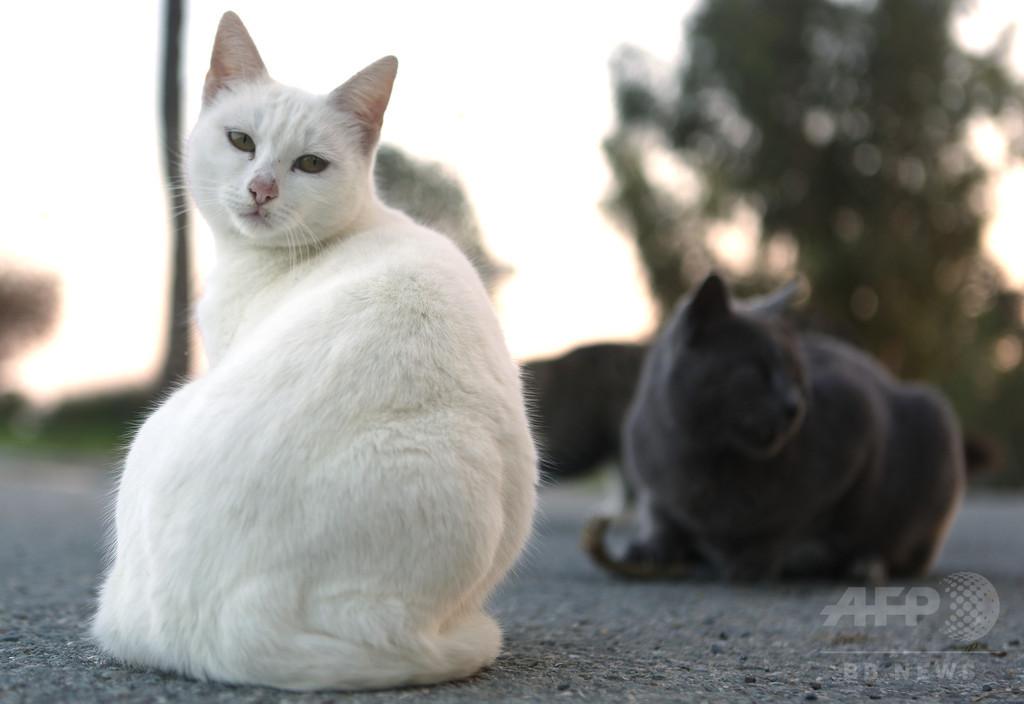 「聖人か罪人か」、英大聖堂の人気猫に裏の顔?