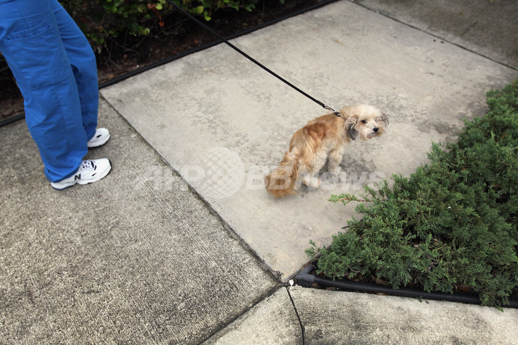 「犬のふんを拾って金塊を当てよう」、台湾・新北市で今年も
