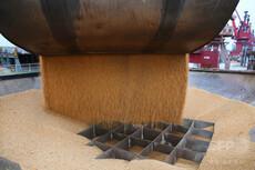 破産相次ぎトランプ憎しに転じ始めた米大豆農家