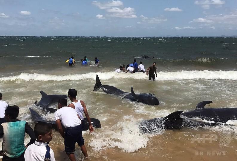 スリランカ海岸にクジラの群れ、海兵と地元住民が救出