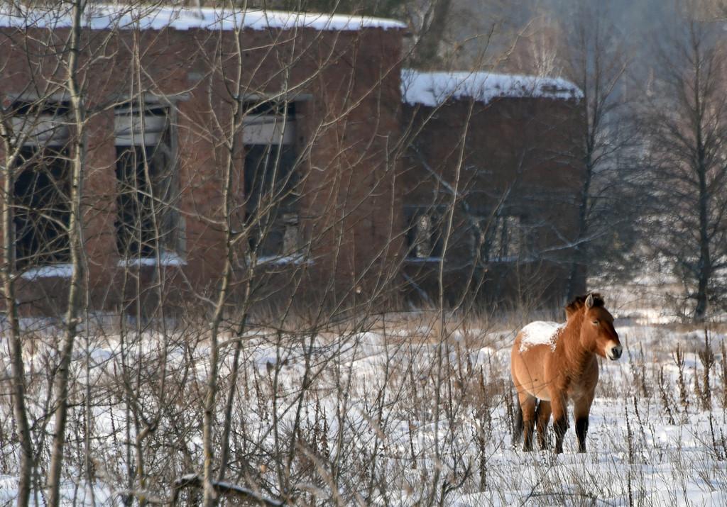チェルノブイリで「環境ルネサンス」か、事故から30年