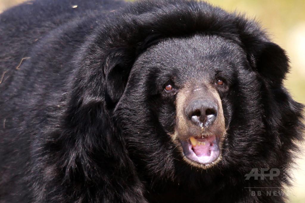 飢えたクマが多数出没、襲われて2人死亡 ロシア極東