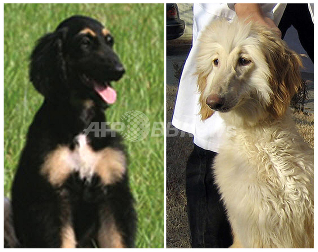 世界初のクローン犬「スナッピー」、子どもの里親を募集へ 韓国