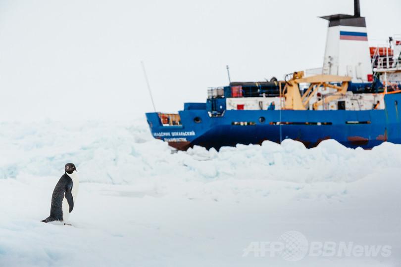 南極のペンギンから新種の鳥インフルウイルス